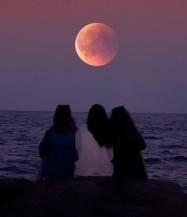 MoonFriendscrop
